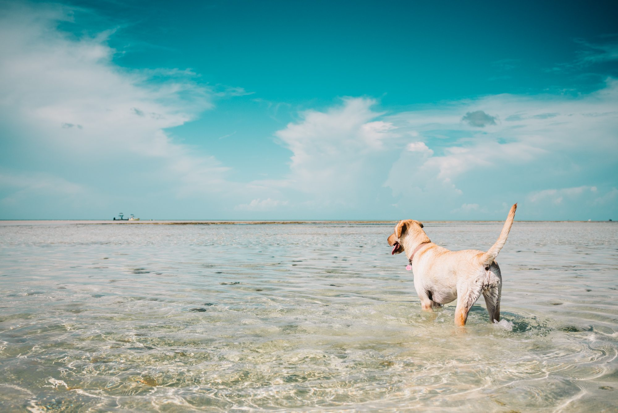 Snipes July 31st 8 - An Island State of Mind - A Key West Photographer and His Backyard