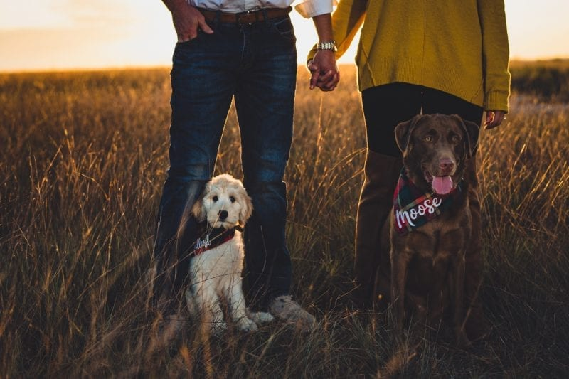 Family portraits with their dogs in Asheville