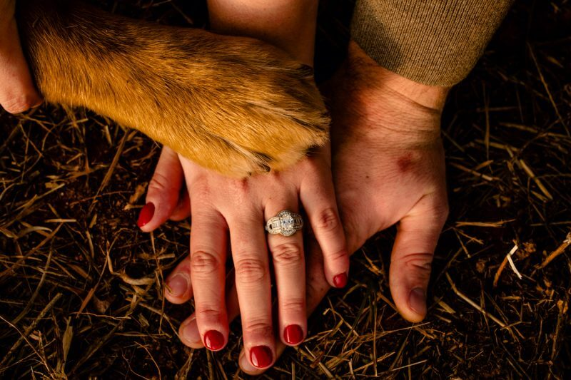 Engagement photoshoot closeup on couple's hands and their dog's paw