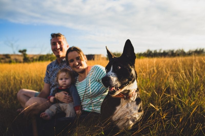 Parents having a family portrait with their baby and dog