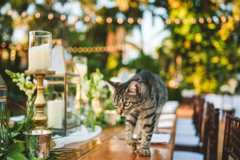 Cat on a Table setting for wedding reception at hemingway house in key west