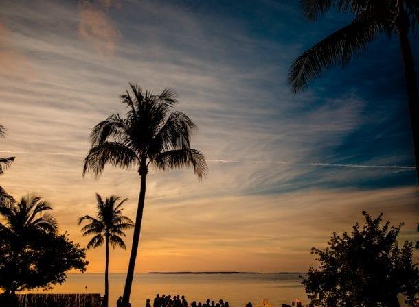 Palm trees in playa largo at sunset