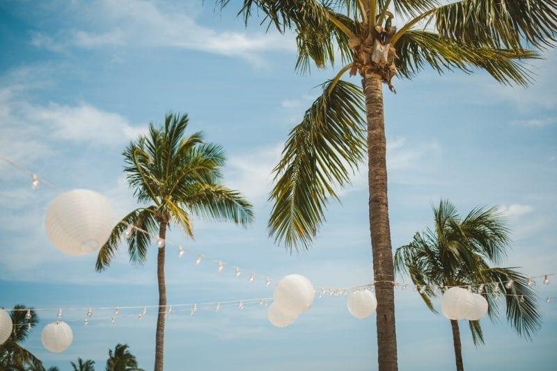 palm trees for beach wedding at southernmost beach resort