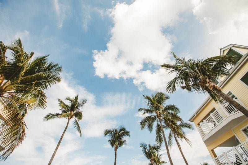 palm tres on the beach at southernmost beach resort