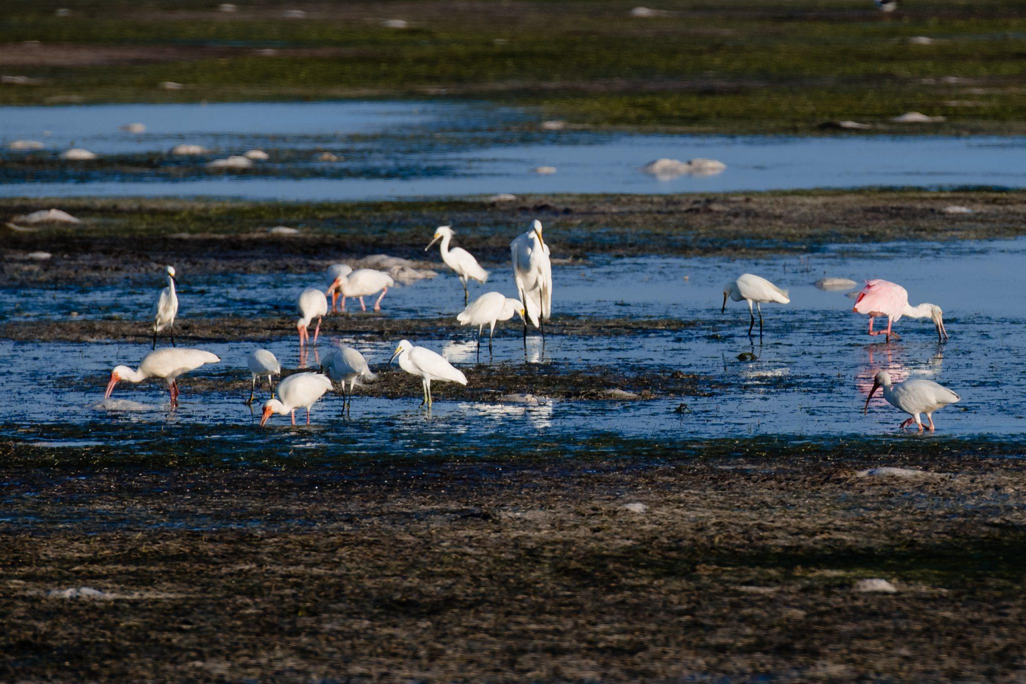 birds sitting on the beach in key west