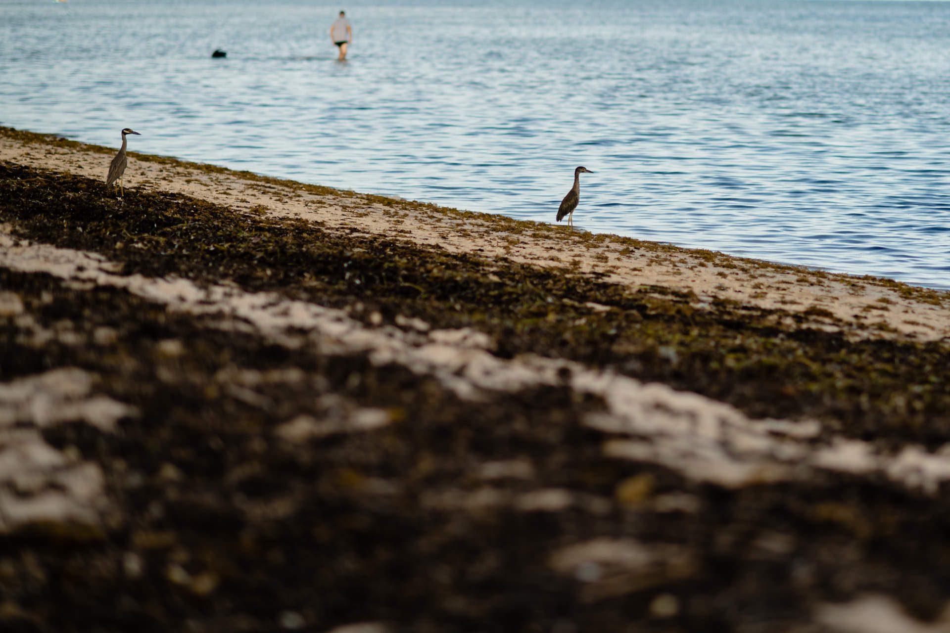 Pelican at the beach.