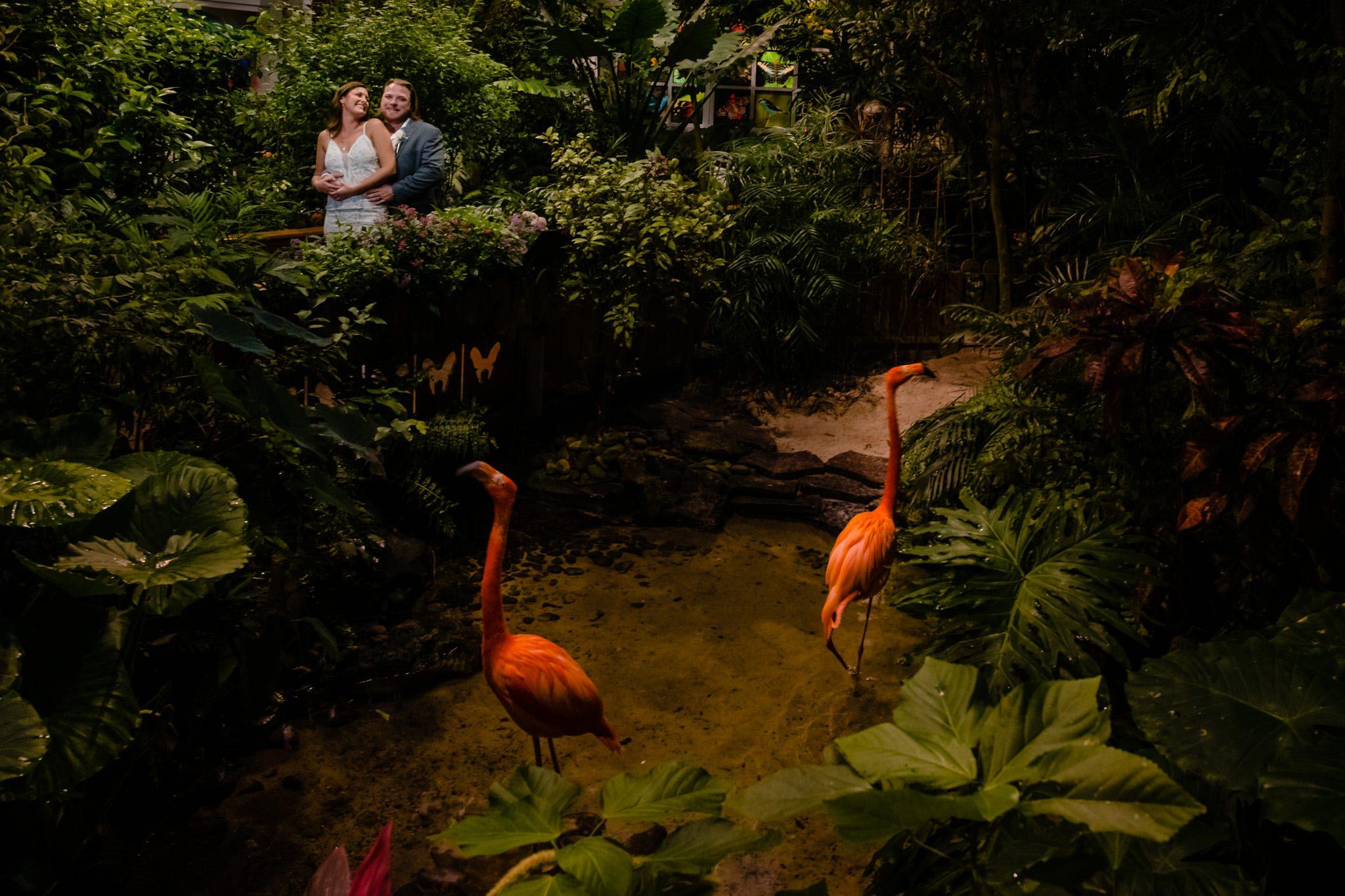wedding couple behind the flamingos rhett scarlett at key west butterfly conservatory