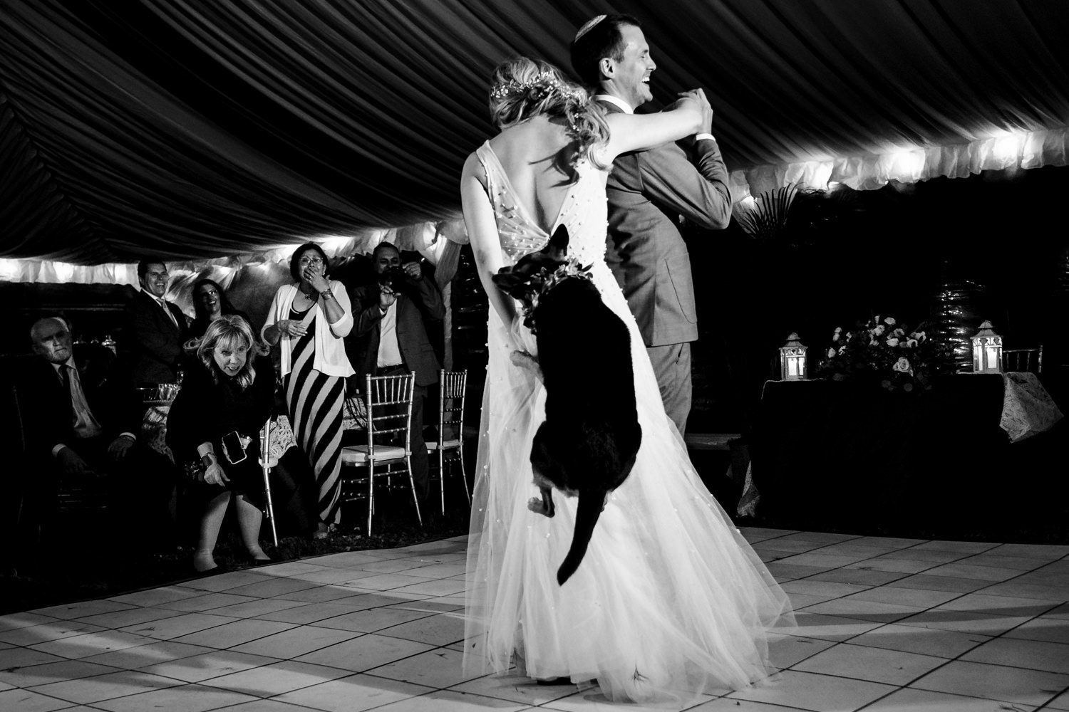 dog jumping and biting brides dress during the first dance