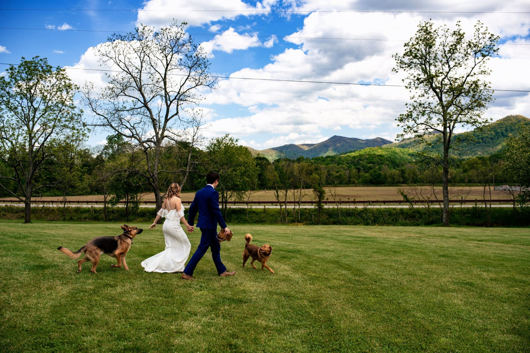 Couple walking across a grassy clearing with their dogs after eloping in Asheville
